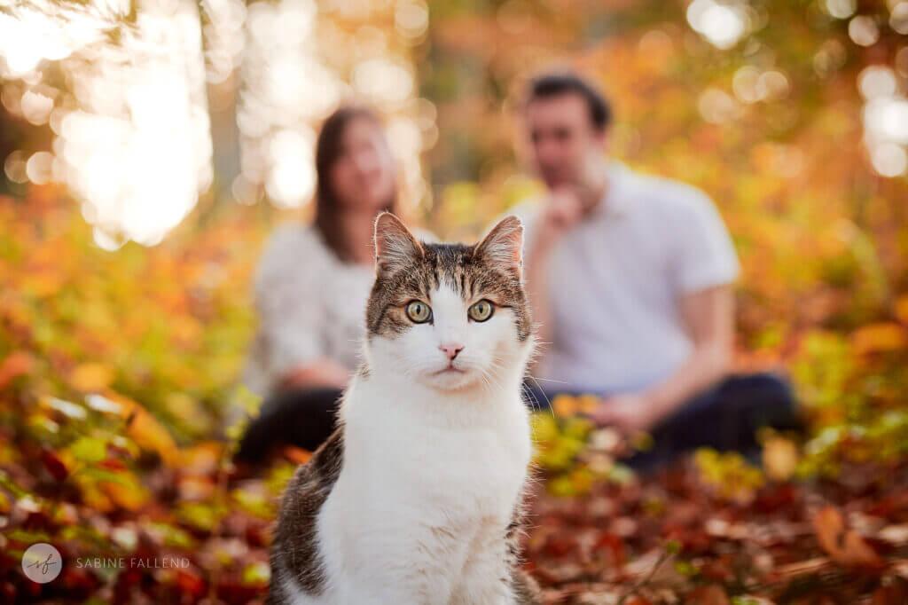 Katze und Menschen