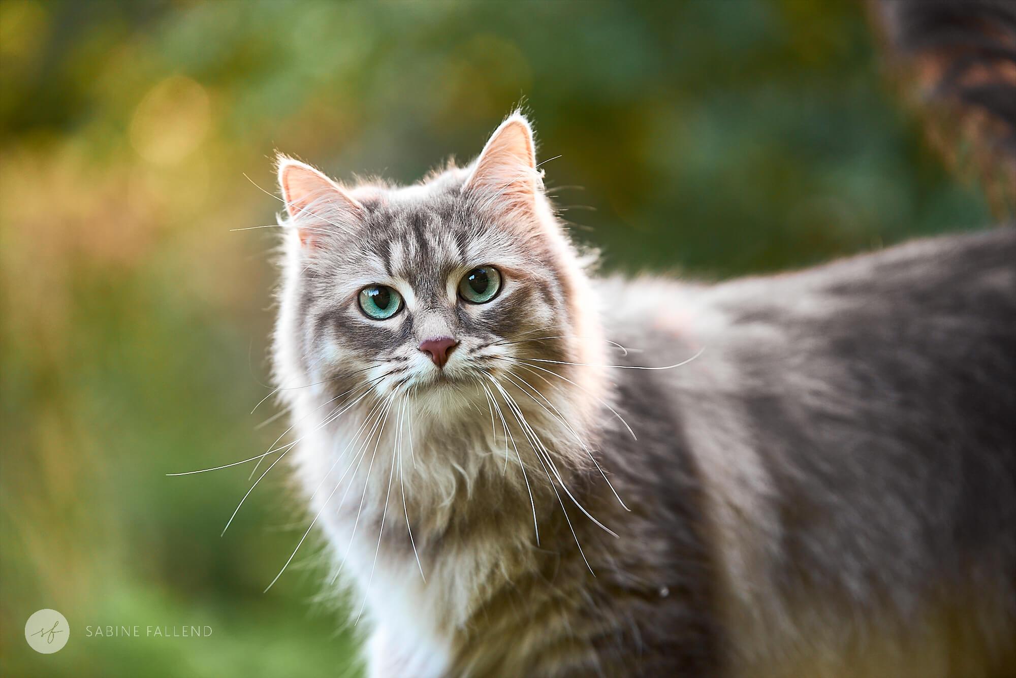 Katze Portraitfoto