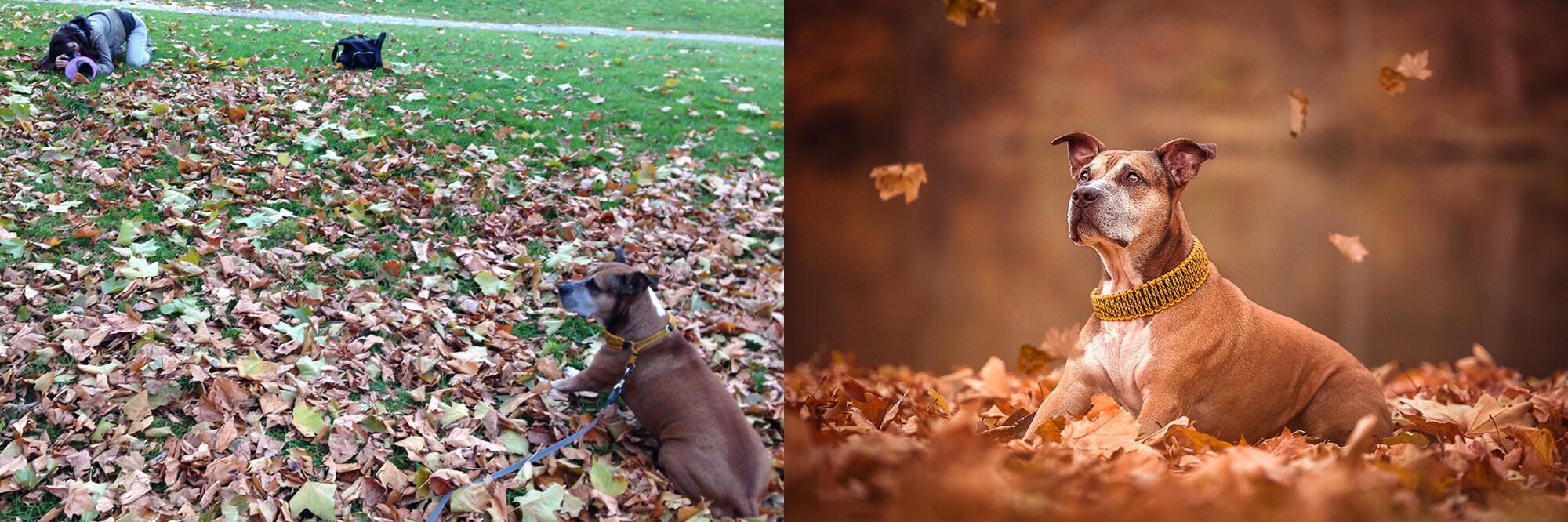 Hundefoto Making of