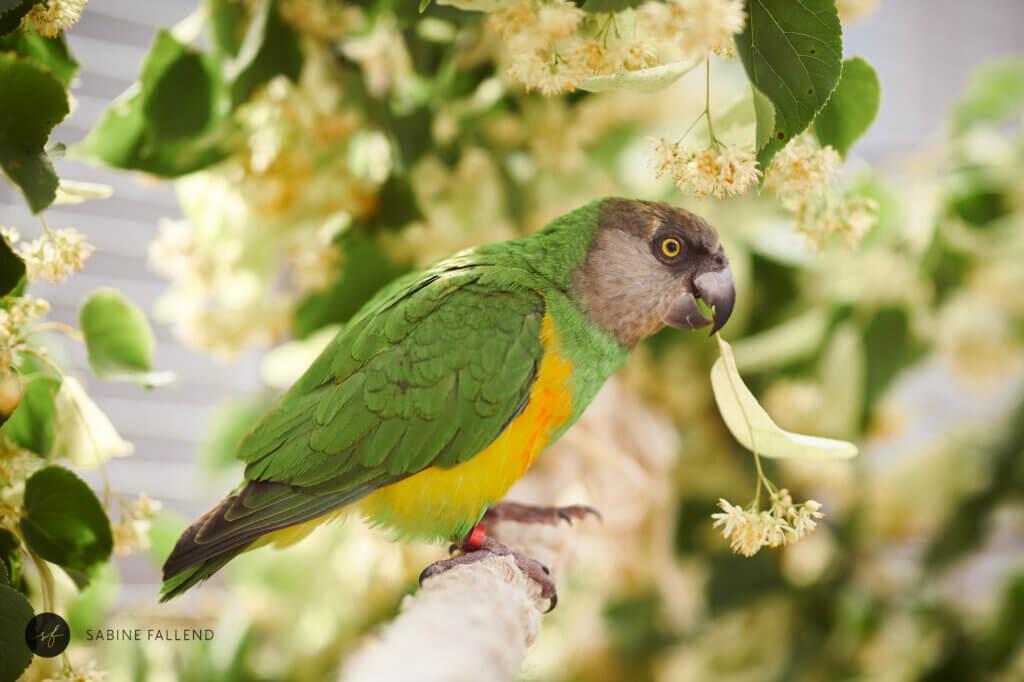 Papagei im Tierheim