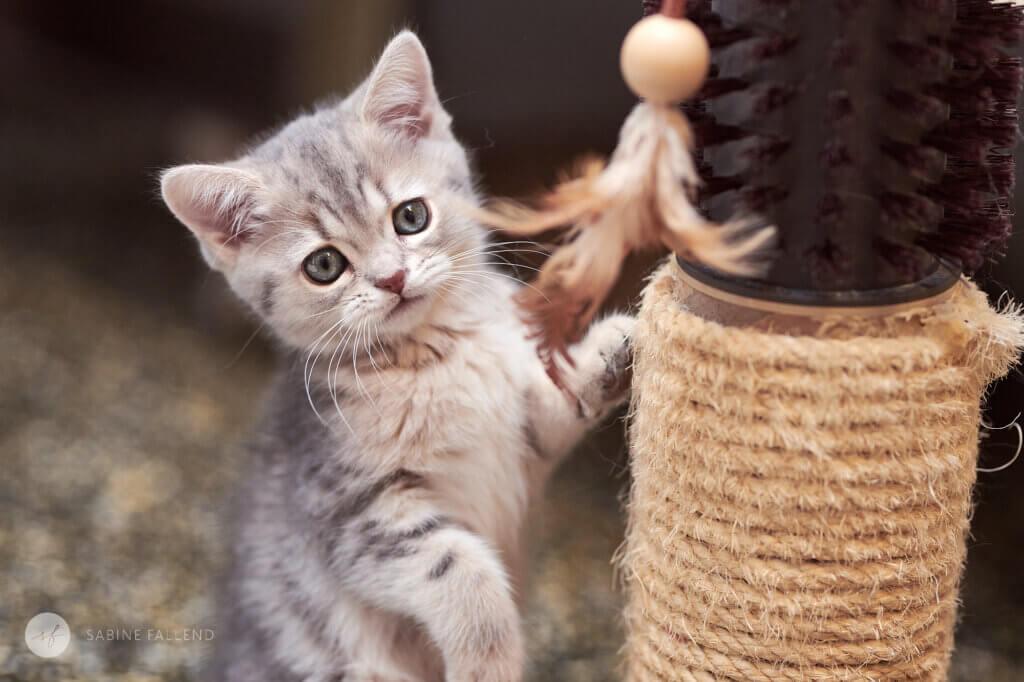 Tierschutzkatze
