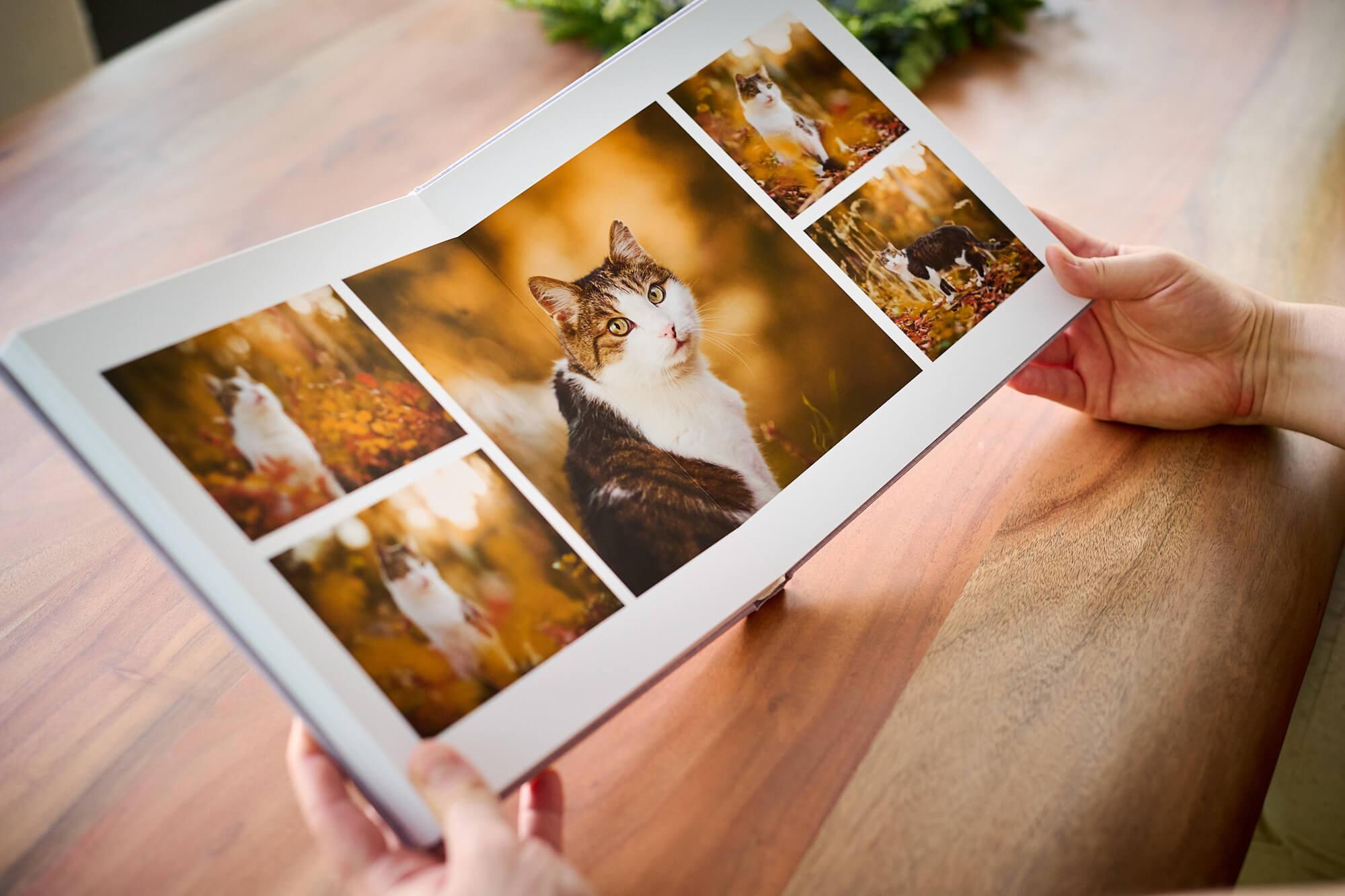 Fotoalbum mit Katzenfotos